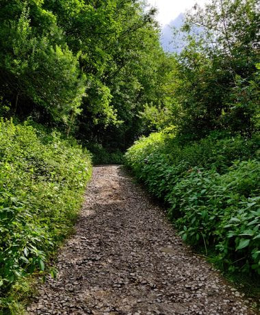 Stone path between thick green undergrowth and tall trees in Armley Park leeds