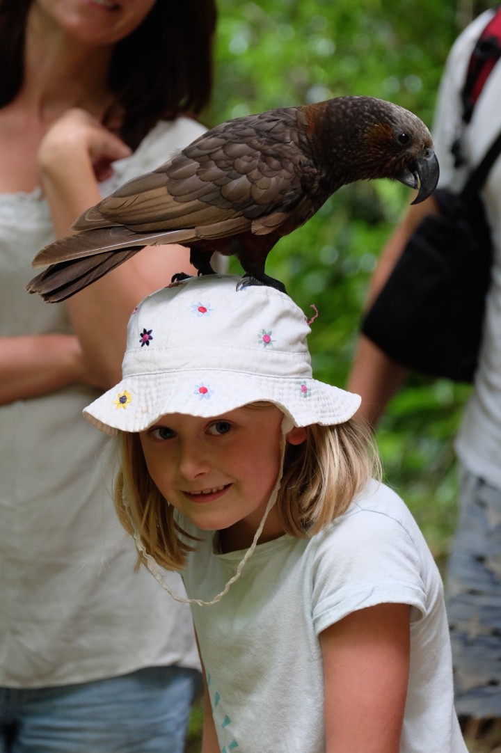 Bird standing on a young girls hat