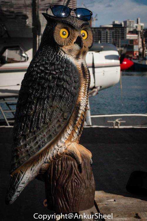 Auckland_Seaplanes-5
