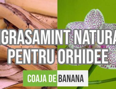 Stiai ca Coaja de Banana este un superb Ingrasamant pentru Orhidee