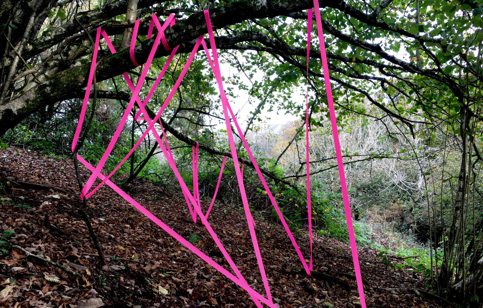 installations tape-in-woods-1