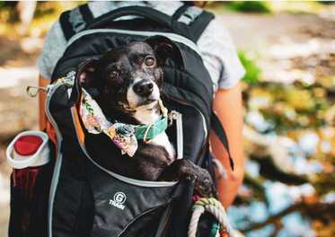 Dog-Friendly Hikes: Vermont