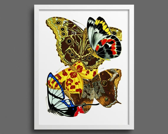 Papillons by EA Seguy - plate 15