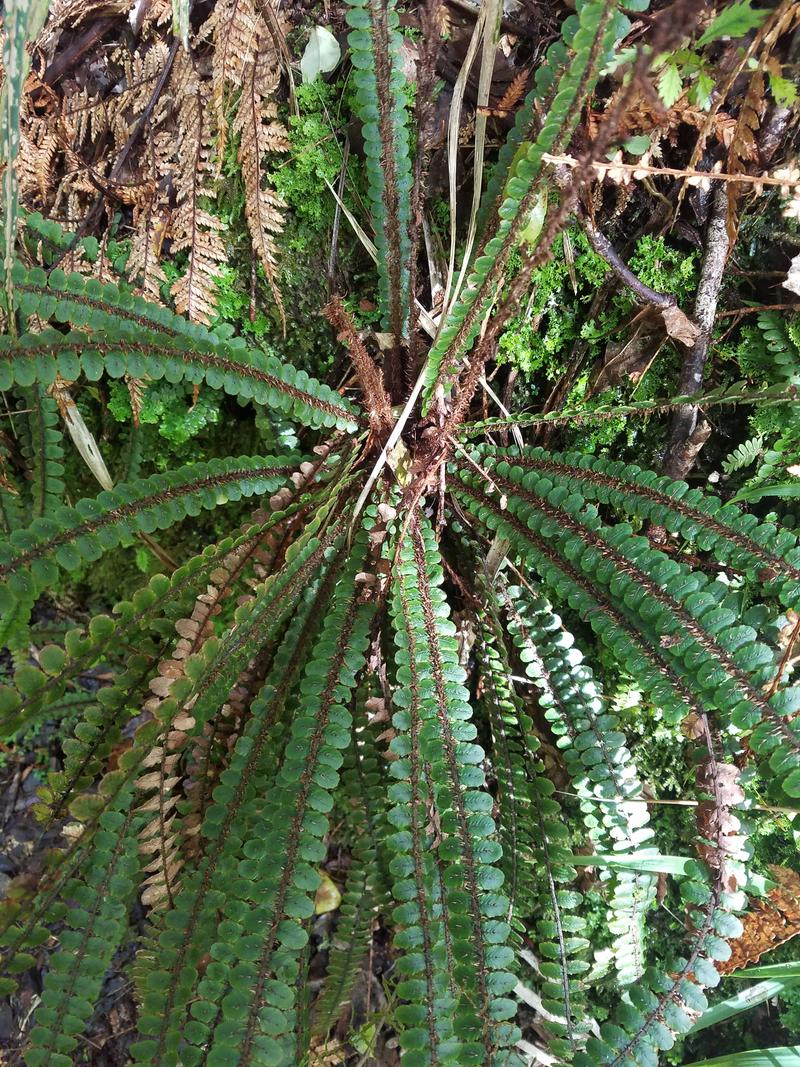 Interesting ferns