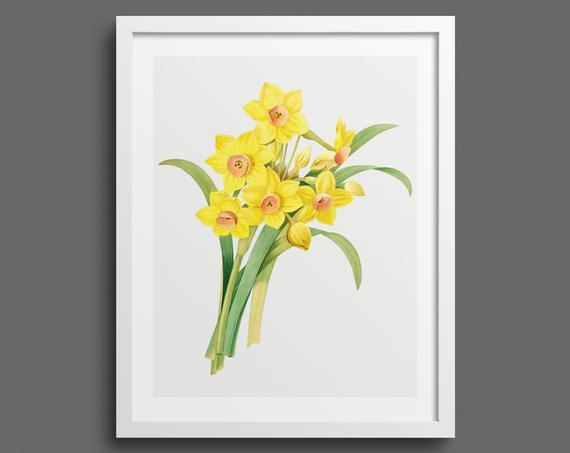 Daffodils by Pierre-Joseph Redouté