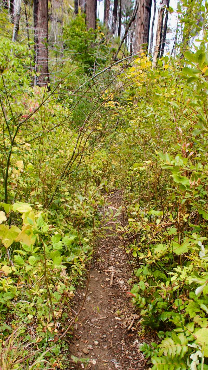 An overgrown section of trail