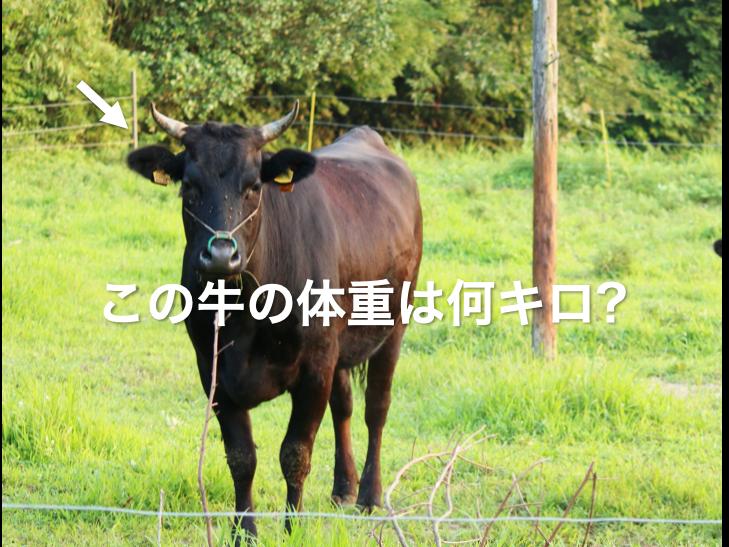 この牛の体重は?