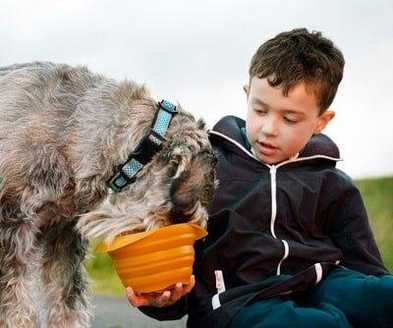 10 Healthy Human Foods Risky for Pets