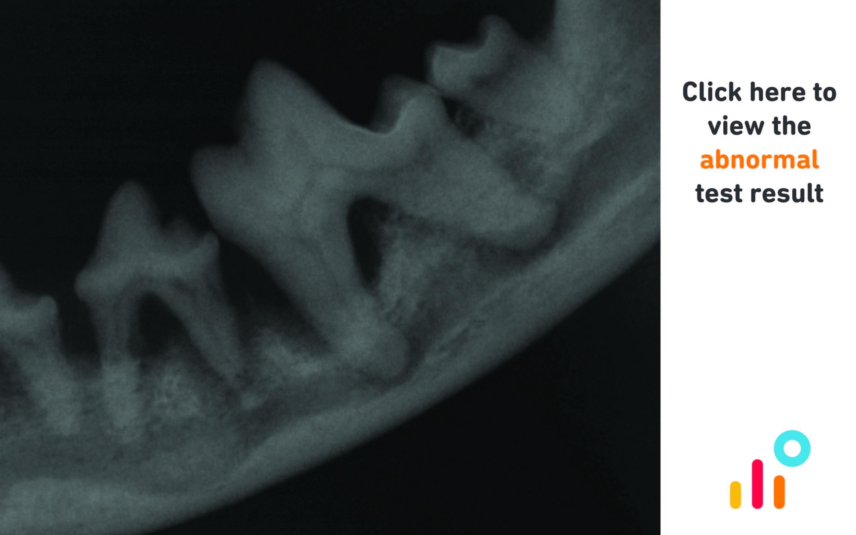 Canine dental radiograph