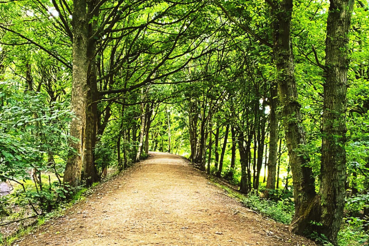 Path though Bramley Fall Woods on a sunny day with a canopy of green leaves