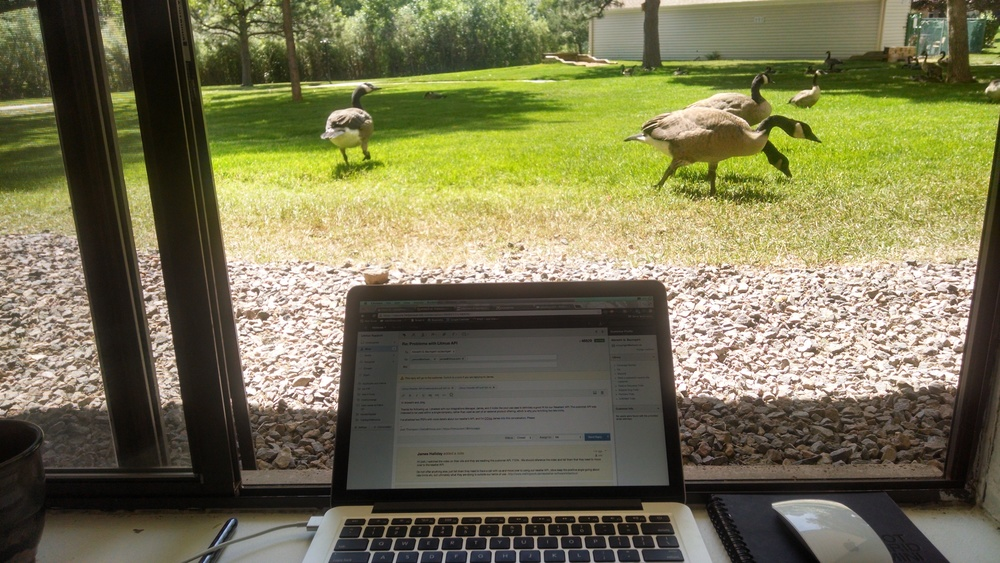 There are about twenty geese that live next to my apartment. The wander around all morning eating. I get to watch.