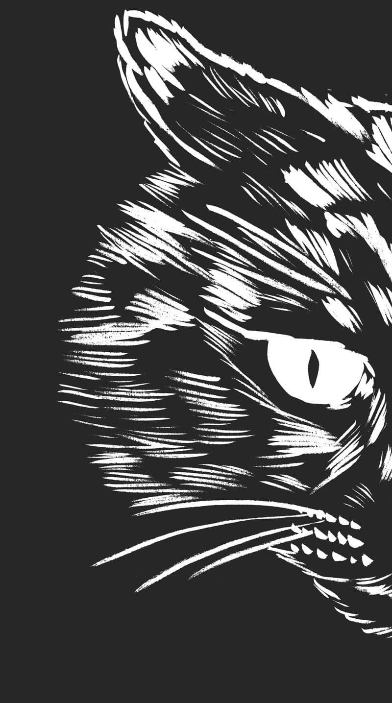 tete de chat en colère à droite