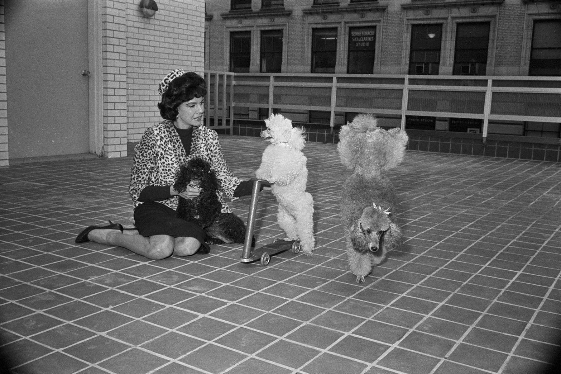 Жаклин Сьюзанн со своими пуделями в 1963 году. Источник: luxfon.com
