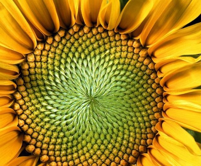 https://www.treehugger.com/slideshows/natural-sciences/nature-blows-my-mind-hypnotic-patterns-sunflowers/