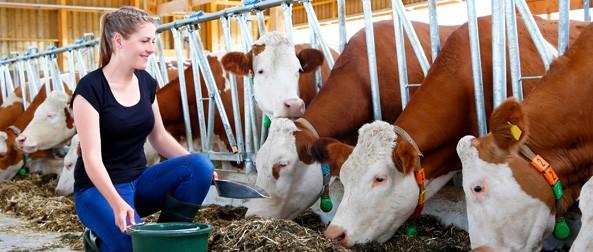 Barn & Farm Supplies