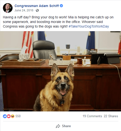 Schiff_Dog