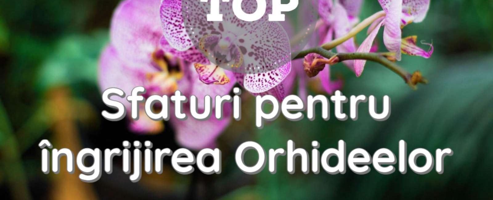 Top 5 sfaturi importante care vă vor ajuta să îngrijiți orhideele