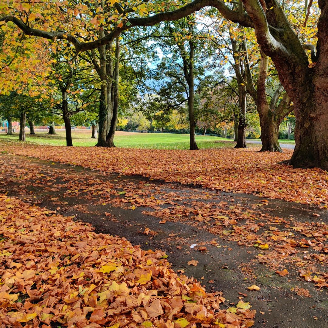Burley Park path in Autumn
