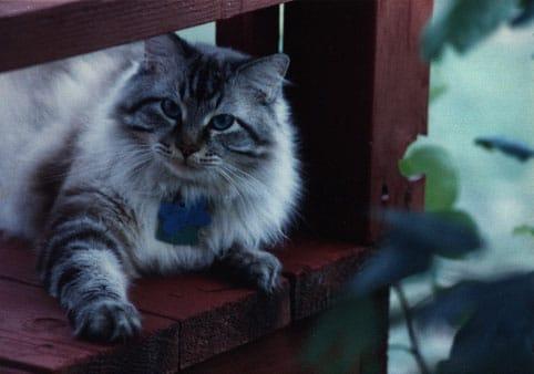 Ralph the cat