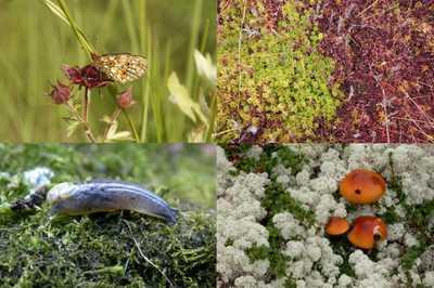 Rostliny a živočichové