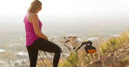 Finding the Perfect Hike for You and Your Dog