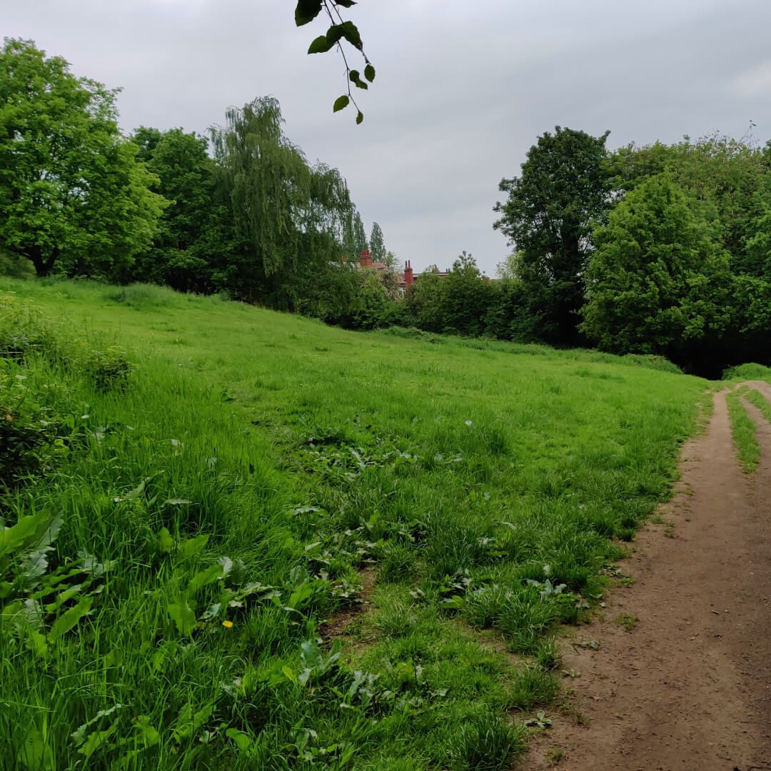 Woodhouse Ridge path and grass