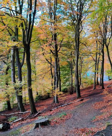 Gledhow Valley Woods path along the hill in Autumn