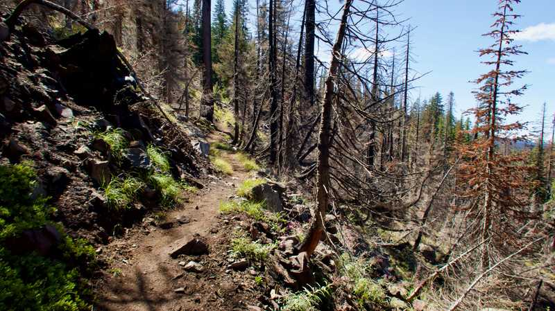 Entering a burn area on the PCT