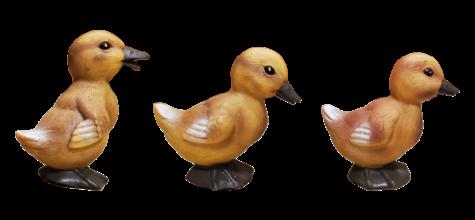 Ducklings photo