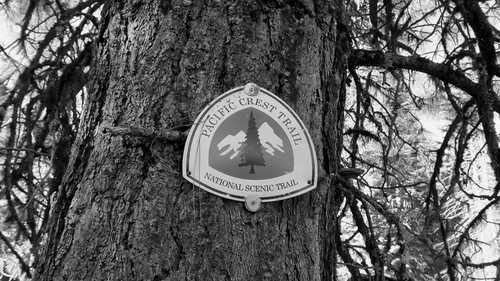 A PCT shield emblem mounted to a tree