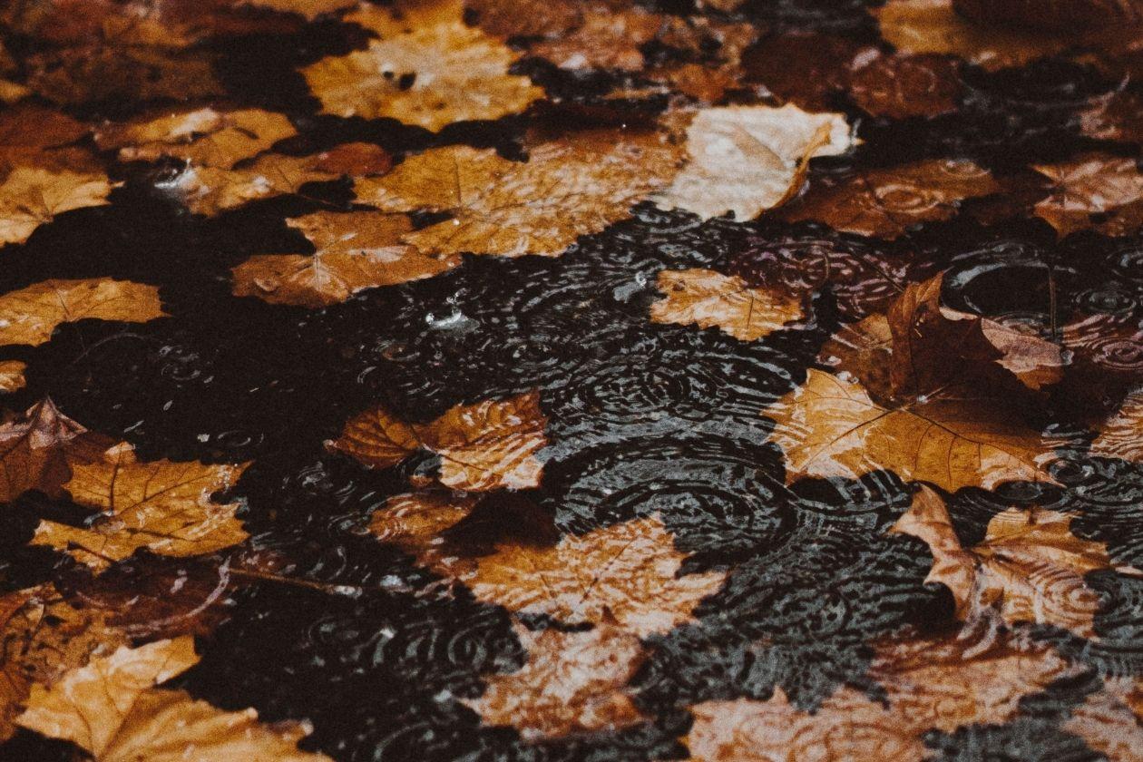 Regen der auf Asphalt fällt und eine Pfütze bildet. Bunte Herbstblätter liegen auf der Straße.