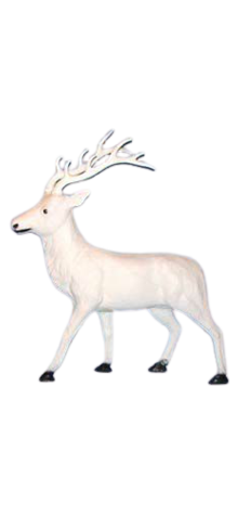 White Reindeer photo