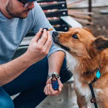 cbd oil for dogs use