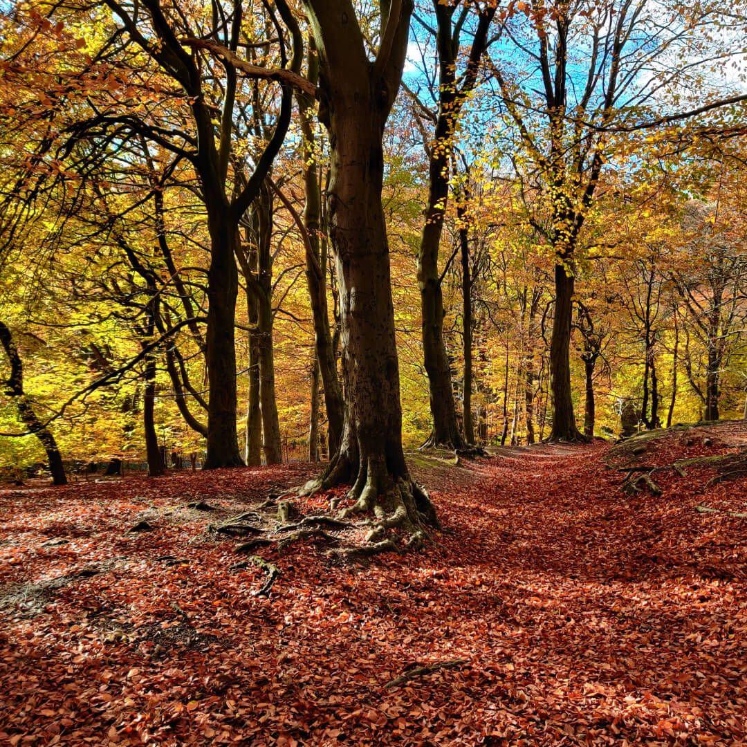 Gledhow Valley Woods in Autumn