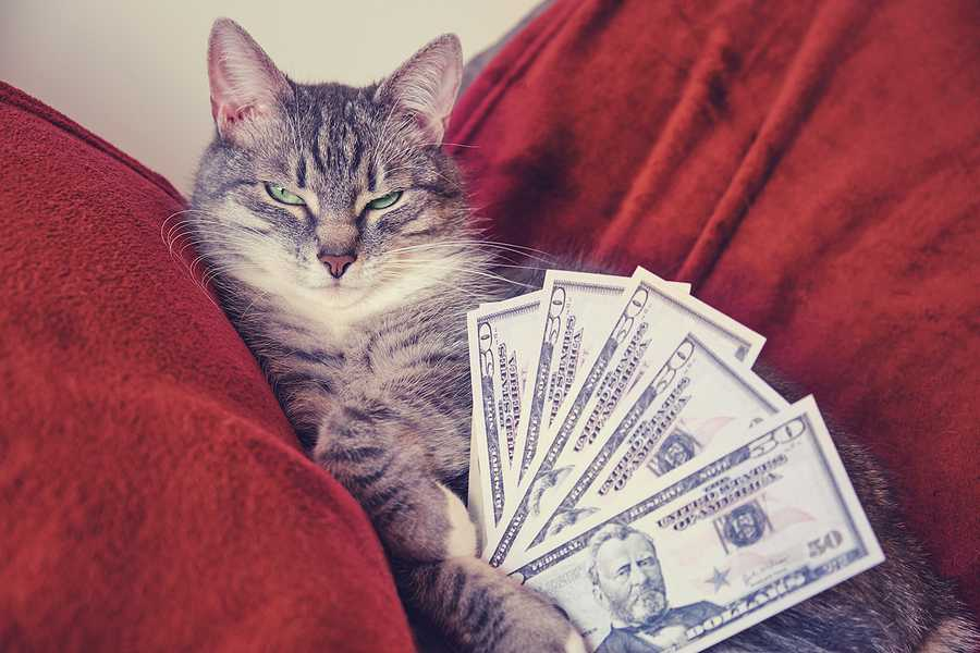 Why Pet Fees are an Essential Landlord Strategy