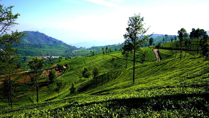 Plots of land for sale in tea estates