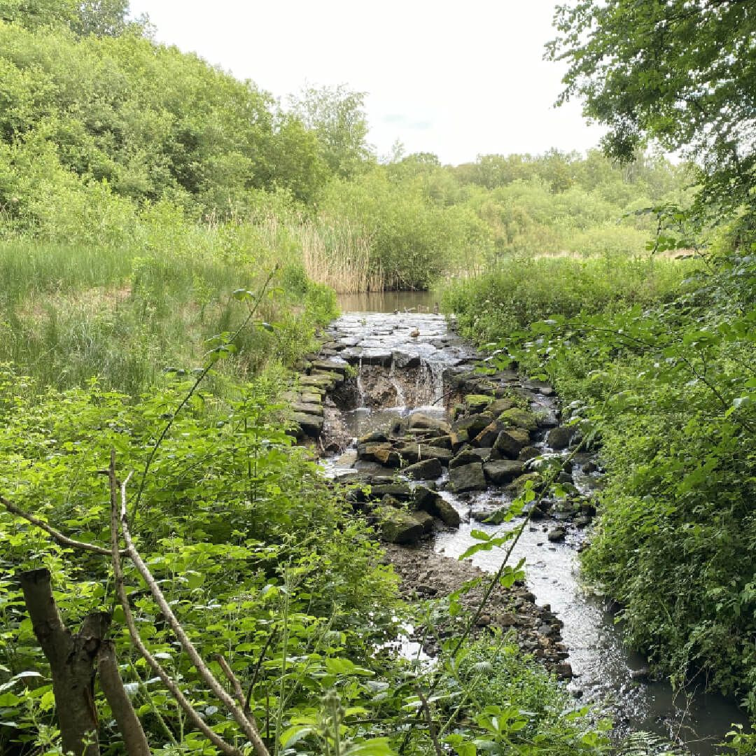 Adel Nature Reserve waterfall