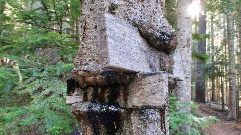 Tree eating trail markers