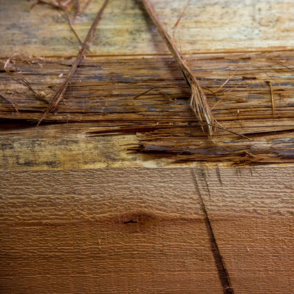 Detail shot of the wood that artist Brett Sparrow uses for carving