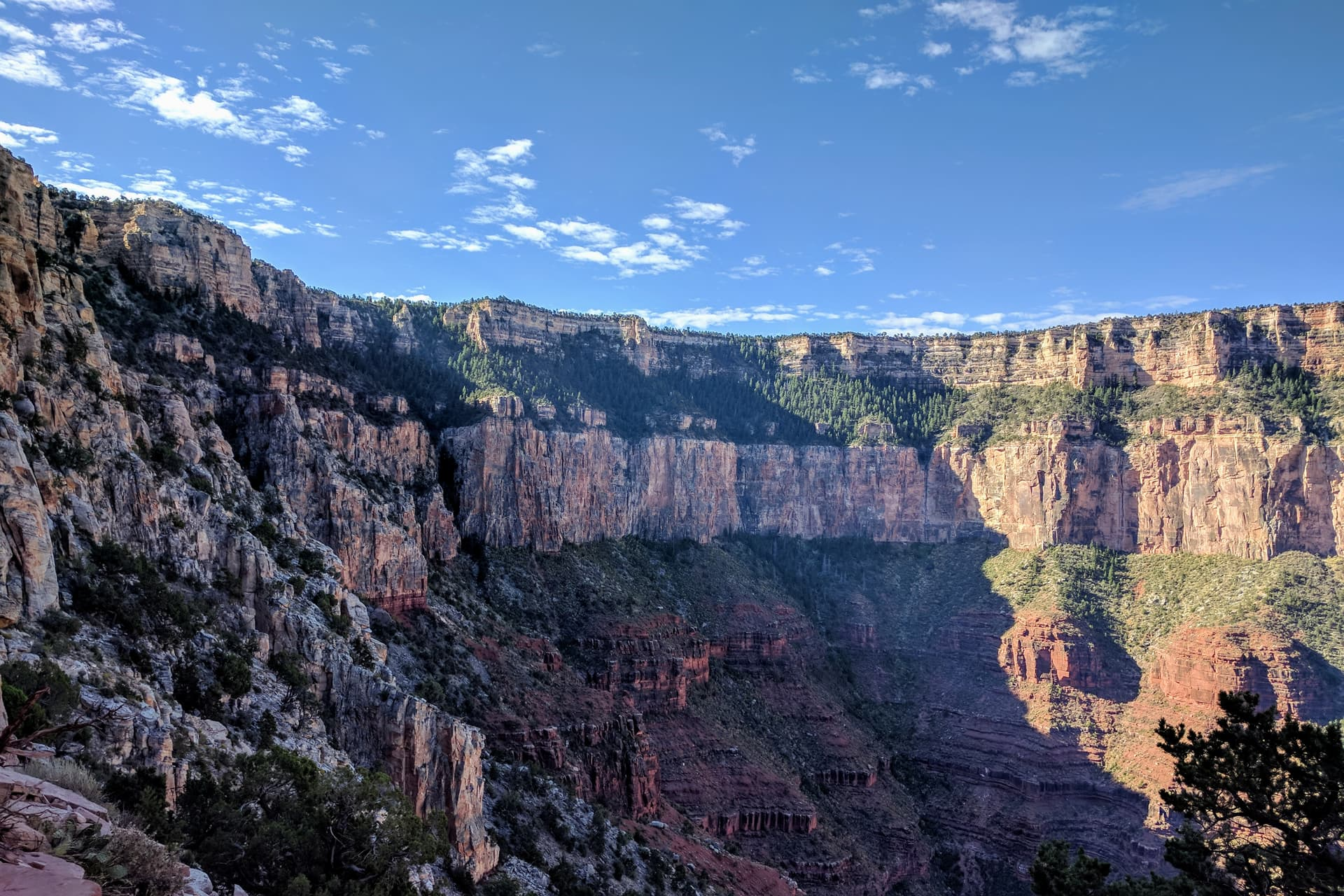 A concave portion of the South Rim of the Grand Canyon, seen from some distance in. Thick bands of red and white rock form steep cliffs linked by only slightly less steep, pine-tree covered slopes.