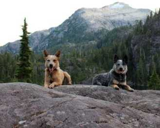 Dog-Friendly Hikes: British Columbia