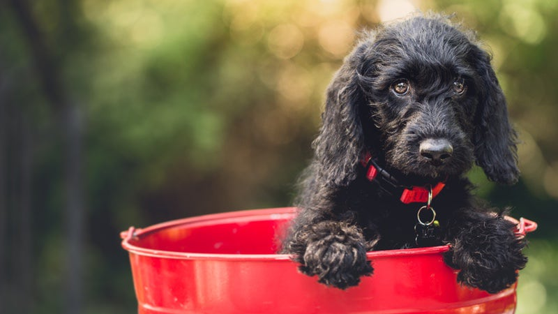 Cute dog in a red bucket