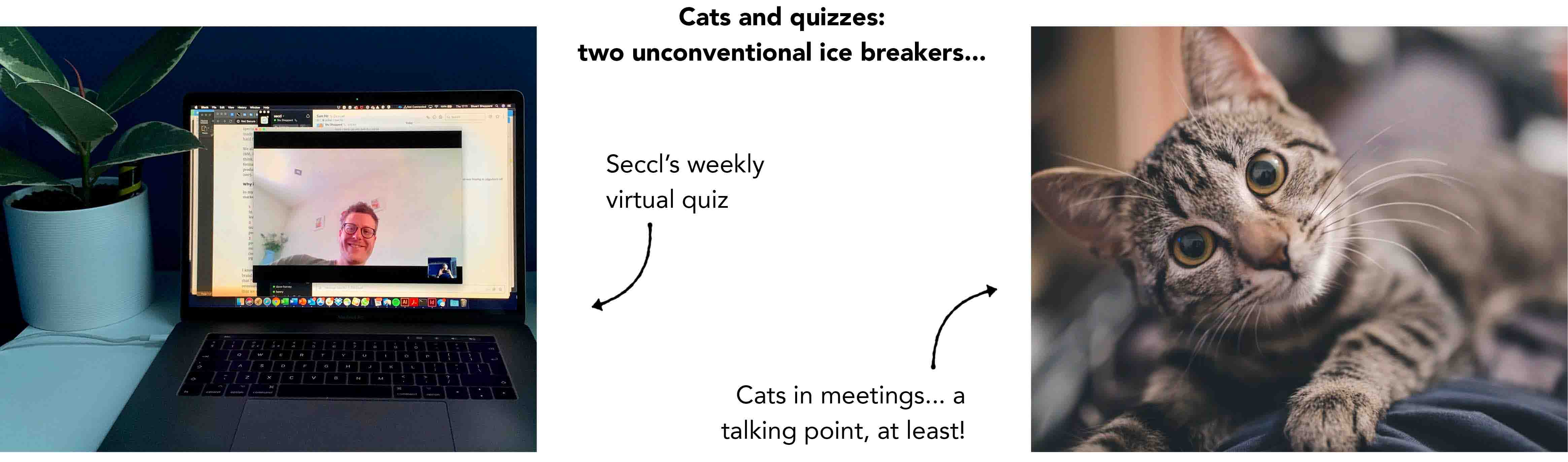 Seccl's weekly virtual quiz – and the odd pet cat – have helped to break the ice...