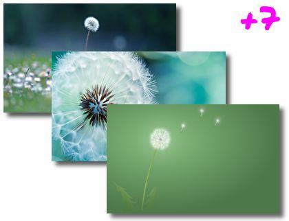 Dandelions theme pack