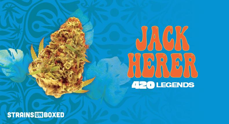 7ACRES Jack Haze (Jack Herer) – Strain
