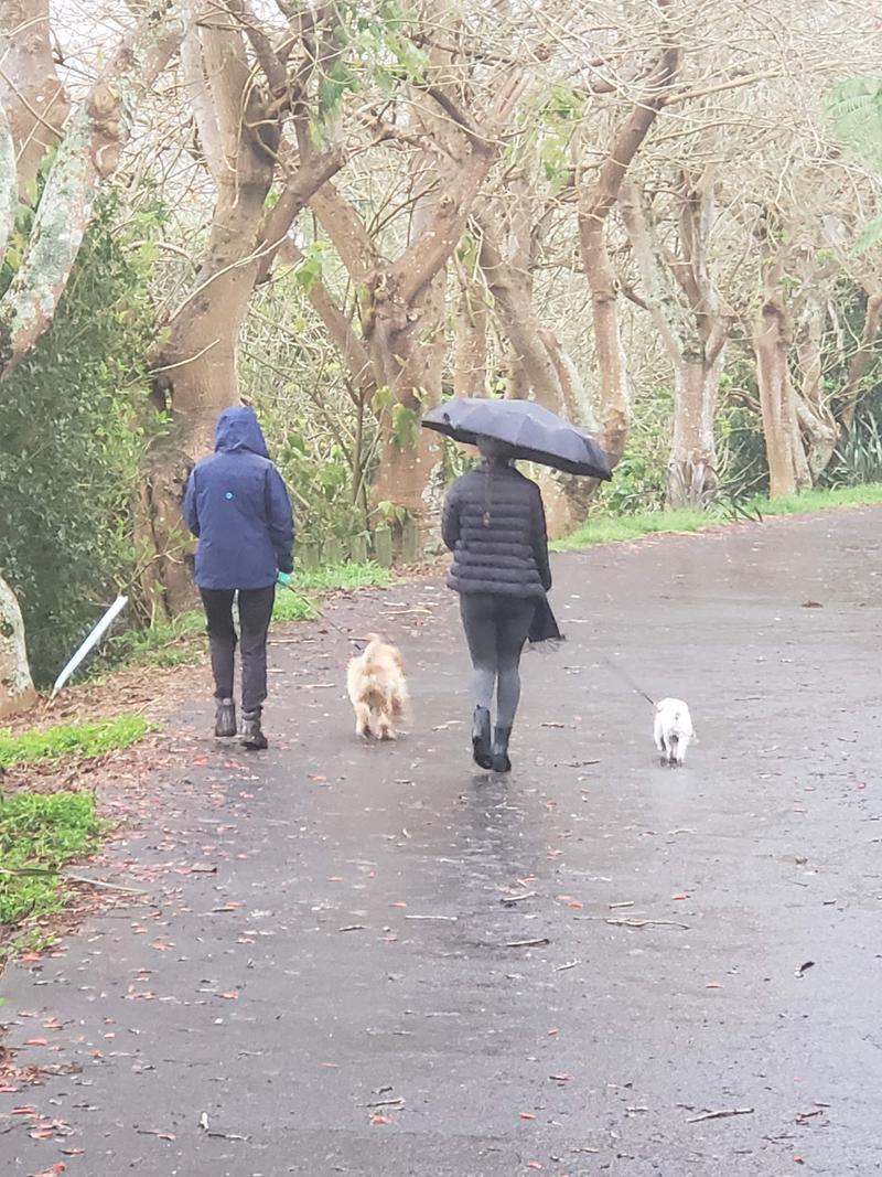 Neighborhood walks - rain or shine