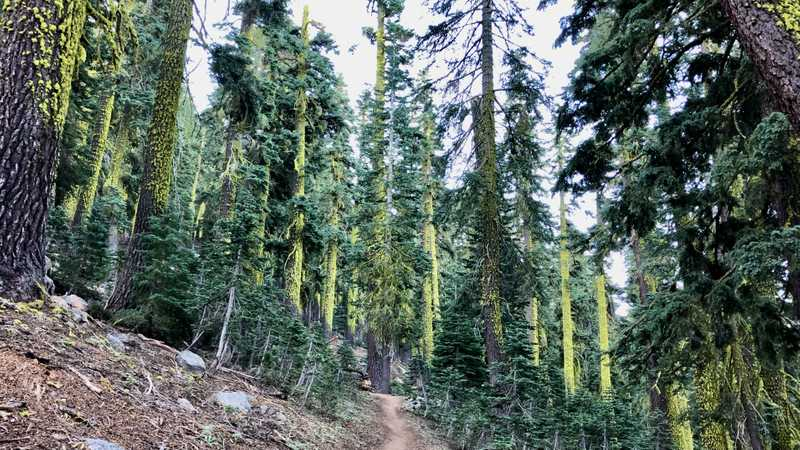 Luminescent trees on the PCT
