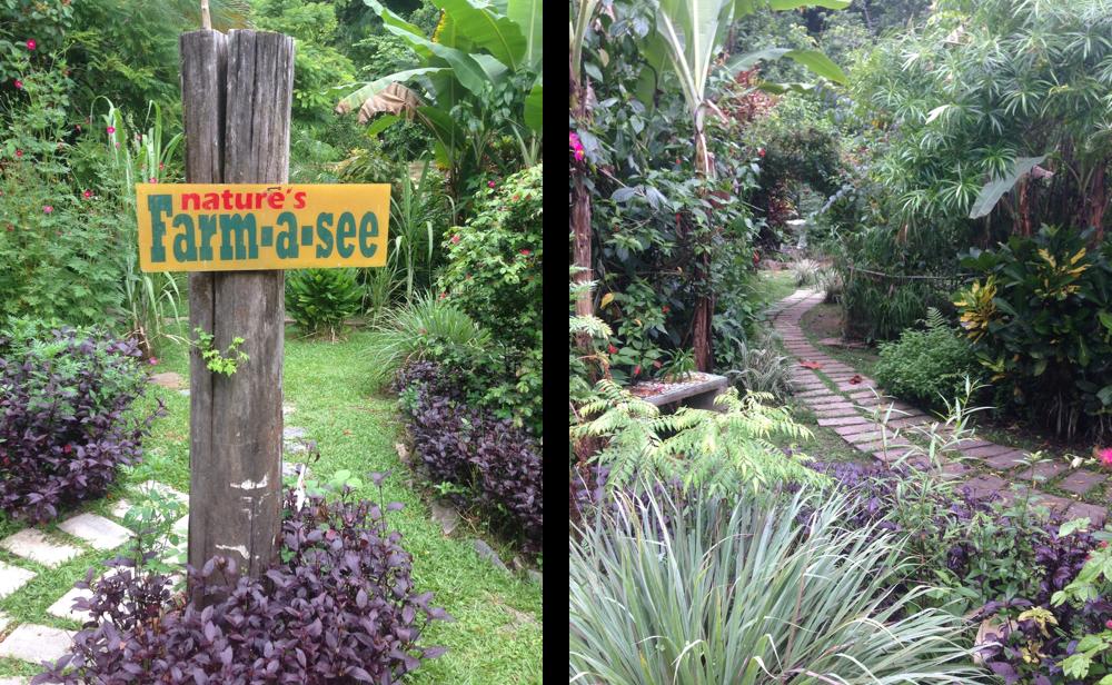 Cafe Mariposa gardens