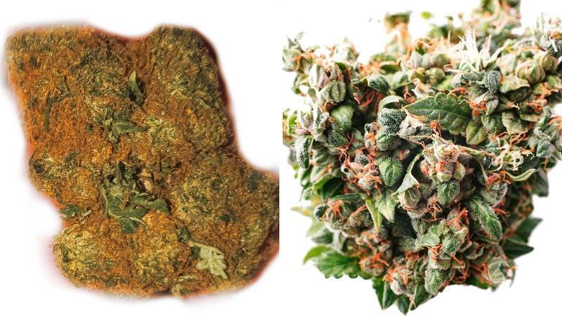 PGR Weed VS Natural Marijuana