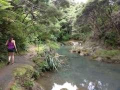Start of Mokoroa Stream track